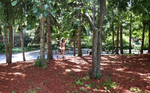 Ryerson-red-forest
