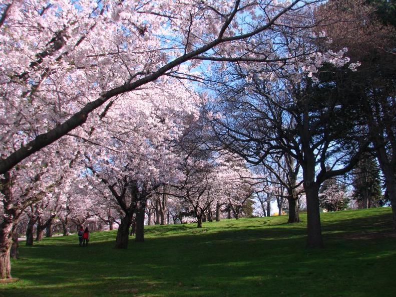 park spring blossom - photo #18