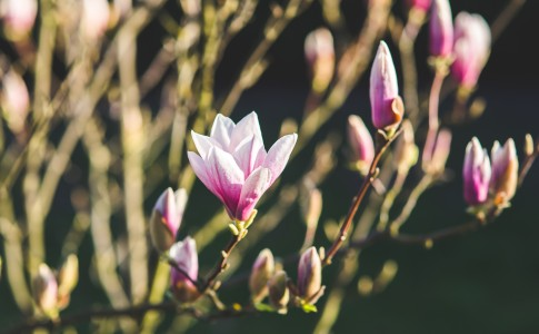 nature-flowers-plant-spring