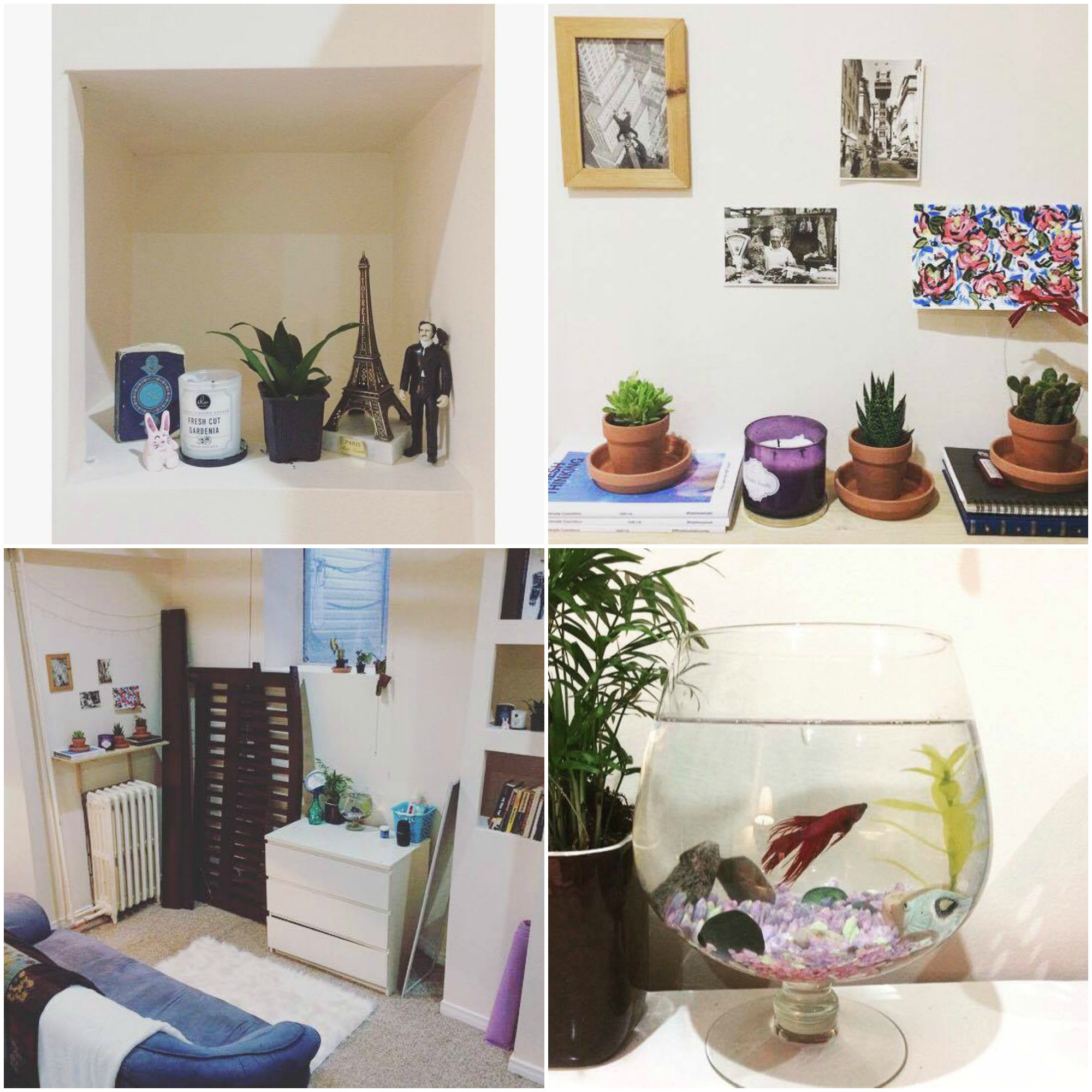 collage of an apartment with framed photos, plants and books