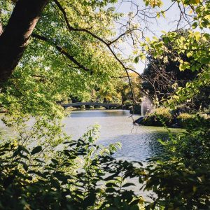 the view of a river and bridge in central park, surrounded by greenery
