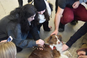 A group of students pet a Therapy Dog